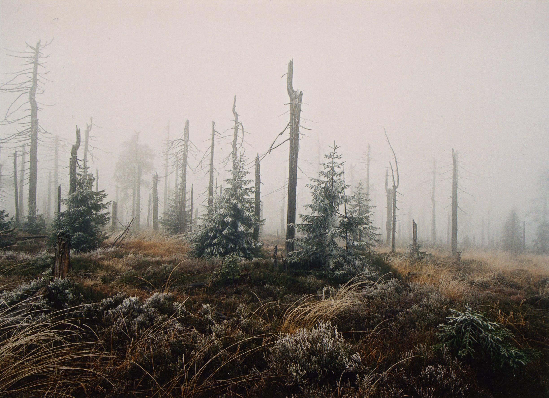 Jizerské Hory zničené kyselými dešti, Jan Veselý